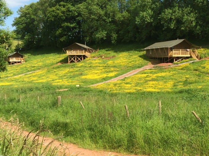 Three luxury safari tents, set in Brownscombe's flower meadow