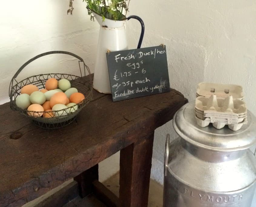 Fresh local duck eggs, for a true taste of Devon holiday