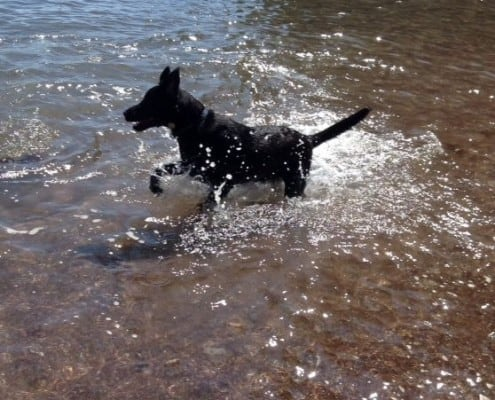 Molly from Brownscombe Luxury glamping at dog friendly beach in South Hams Devon