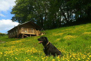 dog friendly brownscombe